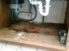 img00102-20100903-1041
